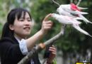Wanita Muda Ini Penghasilannya Rp 60 Juta Per Bulan Jualan Popok Burung