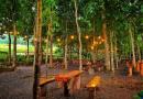 Alas Trawas, Kafe Dengan Nuansa Hutan Yang Sejuk